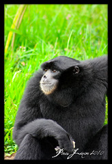 O pensador (PERESjunior) Tags: animal canon monkey macaco goinia gois 450d peresjunior