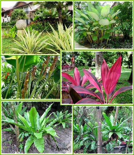 Collage of tropical plants, seen at Felda Residence Hot Springs (Sungai Klah Hot Springs Park)