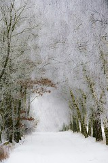 Winter im Taunus (Quasebart) Tags: las schnee trees winter snow ice germany deutschland neve neige wald bume zima taunus gettyimages nieg waldweg drzewa szron rauhreif niemcy szad lenadroga panoramafotogrfico gettyimagesgermanyq1