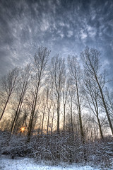 Long trees reaching (Bas Lammers) Tags: trees winter cloud white snow holland tree haarlem nature netherlands clouds forest bomen sneeuw nederland natuur boom fourseasons bos 1022mm hdr hoofddorp lightroom haarlemmermeer 50d haarlemmermeersebos middagzon canon50d haarlemmermeerbos lightroom3beta mygearandmepremium mygearandmebronze mygearandmesilver mygearandmegold