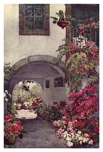 002-Azaleas en un jardin de Madeira-The flowers and gardens of Madeira - Du Cane Florence 1909