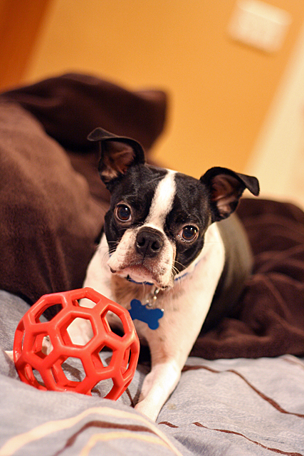 kosmo's ball