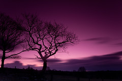 140 seconds of Welsh evening (Izzy Standbridge) Tags: trees sunset sky tree silhouette wales ceredigion naturesfinest bej mywinners canon50d