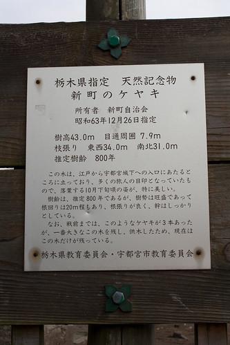 #1 Giant Zelkova of Shinmachi (by Mullenkedheim)