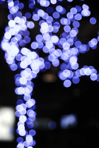 Blue Bokeh Tree