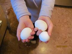 M modelling eggs