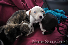 dogs02.jpg (N-J_Photo14) Tags: dogs animal puppy puppies rescued liberated spayandneuter