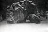 Fontainebleau (Lena in wonderland :D) Tags: camping schnee winter bw holiday snow elephant france cold nature rock analog forest canon frankreich rocks ae1 urlaub natur freezing climbing bouldering kalt schwarz fontainebleau klettern kälte weis bouldern ocùn