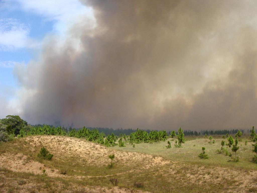 Direção do Parque vai divulgar na segunda a área que foi consumida pelas chamas. Crédito: Divulgação
