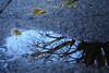 水たまりの鏡面
