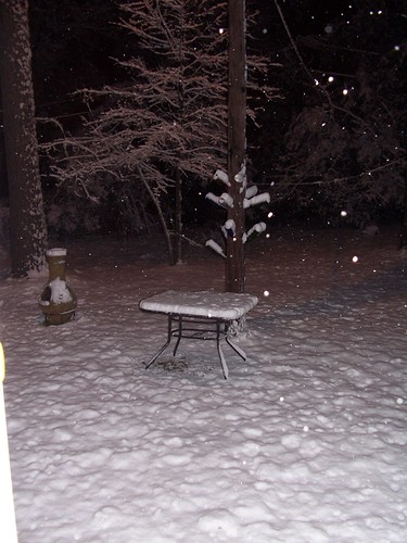 the backyard at 10:30 PM