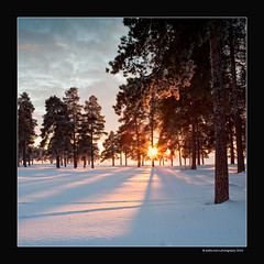 evening sun (stella-mia) Tags: winter sunset shadow sun snow ice norway forest shadows lensflare hamar mjsa 2470mm domkirkeodden hightlight hedmarksmuseet canon5dmkii lakemjsa yourwonderland sunnyforest annakrmcke