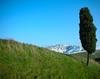 ...nel blu... (rebranca46) Tags: friends panorama snow tree verde nature landscape campagna neve 1001nights albero marche febbraio blueribbonwinner mywinners mywinner rebranca blueskygreen nikonflickraward