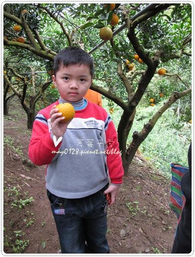 關西採草莓橘子牛欄河2010.02.20-23