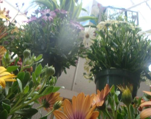flowershop 165