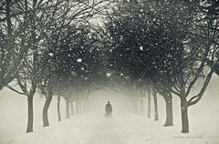 Winter Stalker (Midnight - digital) Tags: trees winter snow cold mono alley loneliness path atmosphere mysterious avenue