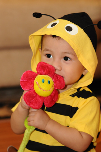 Amirul Bee 3