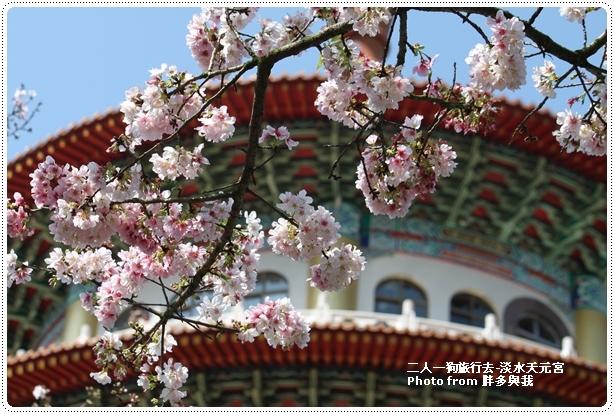 天元宮的櫻花2