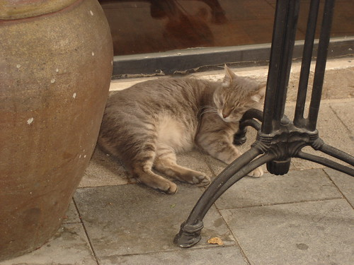 Sleepy restaurant cat