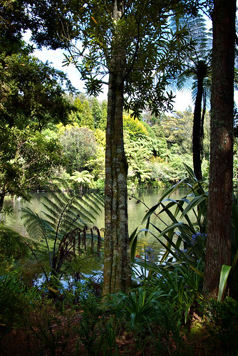Nz Fernery