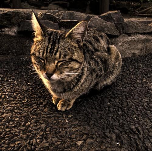 A cat in Ueno park