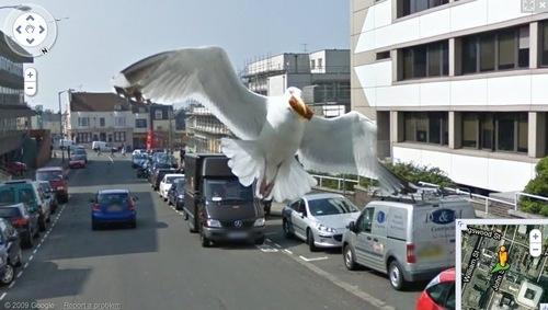 Google 小車歷險記:鴿子的復仇