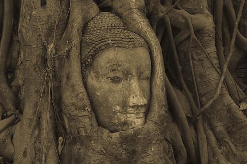 フリー画像| 人工風景| 仏像| アユタヤ歴史公園| 世界遺産/ユネスコ| タイ風景| セピア|     フリー素材|