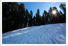 Snowy heaven (Abhinav Singhai) Tags: sun india mountain snow wow shimla nice awesome tamron pinetrees himachal himachalpradesh sunstar oine d40 narkanda incredibleindia nikond40 kurfi ilovewalkman abhinavsinghai tamron1024m