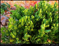 Wadi Hinna, Dhofar (Shanfari.net) Tags: summer nature lumix raw natural panasonic oman wadi fz mountian zufar rw2 salalah hinna  sultanate dhofar  khareef     mirbat          governate  dofar fz38 marbat  fz35 dmcfz35  qaith