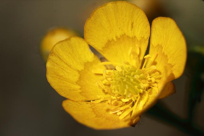 040110_flower06