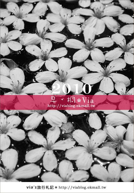 【2010桐花祭】桐花最新情報*彰化挑水古道油桐花