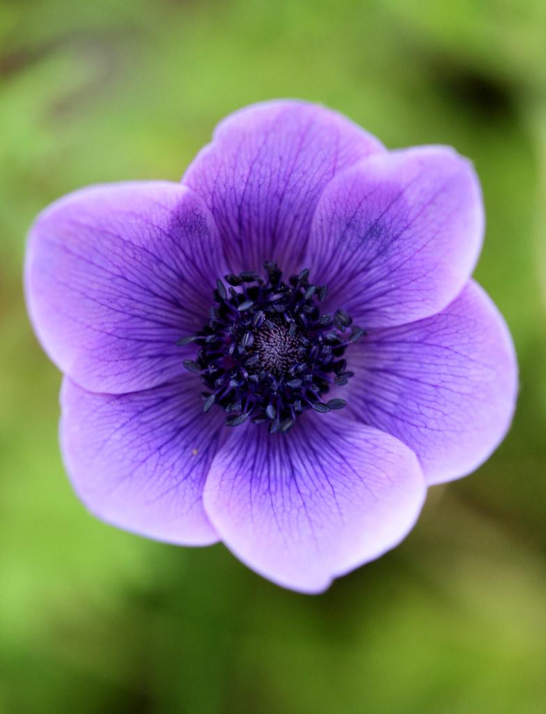 anemone_inside