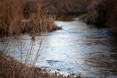 As The River Flows (Rutger Blom) Tags: brown lund nature public water creek skne stream europa europe beek sweden natur skandinavien natuur sverige scandinavia vatten brun scania bruin zweden stroom skane flod strm bck vattendrag ef70200mmf4lusm canoneos5dmarkii skanelan storauppakra