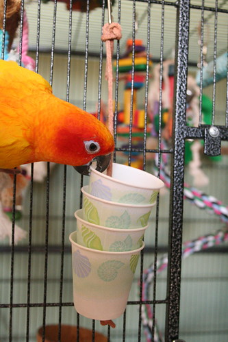 Dixie Cup Foraging Toy | Best in Flock - Parrot Blog