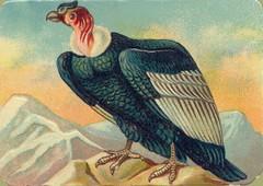 oiseauchromos 12
