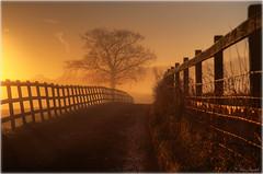 """MistyBredhurstLane (lightpainter_album) Tags: misty sunrise canon sunup lightpainter bredhurst """"peter morning"""" randall"""" """"misty"""