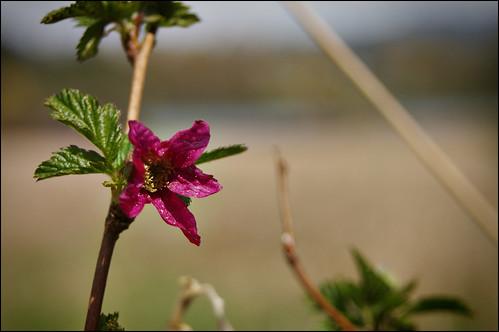 Natural - Deer Lake in Burnaby