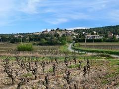 Montbrun-des-Corbières (dynamosquito) Tags: france rural village wine aude ceps vigne languedocroussillon corbières winyard winetree panasoniclumixdmcfz50 dynamosquito montbrundescorbières
