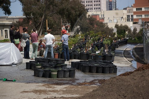 Hayes valley farm dwarf fruit trees