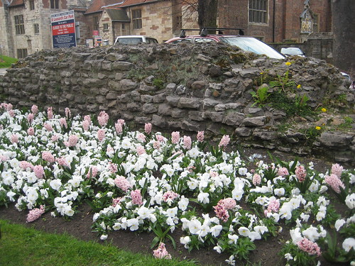 Hyacinth at Roman Wall