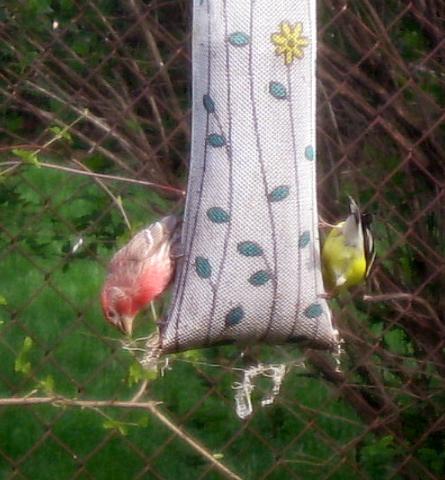 BirdOfAFeather_4256