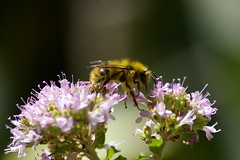 bumblebeegym