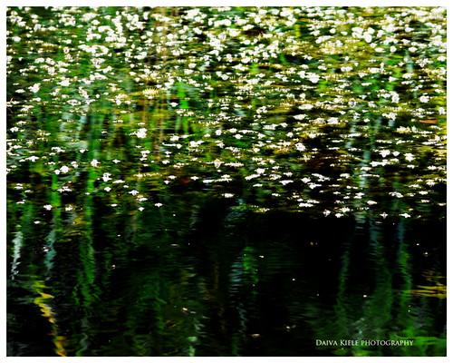pražydęs ežeras