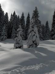 Asiago - Gallio - Campo Mulo (MicheleStellaIT) Tags: winter snow tree alberi neve inverno asiago controluce gallio campomulo innevati