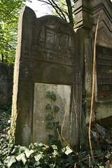 Cmentarz ydowski w odzi / Jewish cemetery in Lodz, Poland (anty_rama) Tags: cemetery poland polska jewish lodz d cmentarz   macewa ydowski