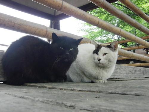 Today's Cat@2010-05-07