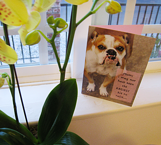 bulldog mothers day card