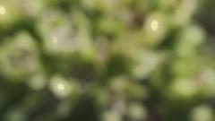 the good bee (whatisgoi) Tags: macro canon video glow bee 5d gloom 65 mkii mpe mpe65 cedarridgepreserve dallasnaturecenter canon5dmkii whatisgoi