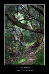 """Oak Avenue"" (Windwalker Images) Tags: oak walk hike trail michaelhansen"