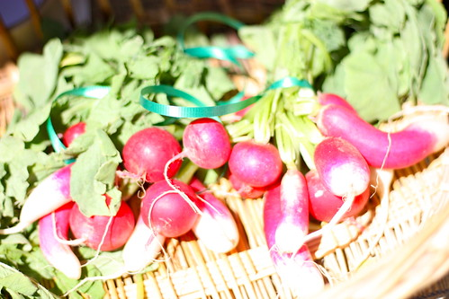 Radishes from Provo Farmers Market 2010